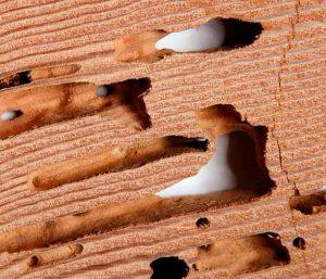 Forma-y-función-de-los-nidos-de-las-termitas-1