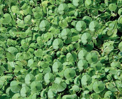 Plantas-que-Atraen-las-Ratas-1