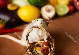 verduras-que-comen-los-roedores-1