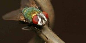 Como-afecta-el-clima-a-las-moscas