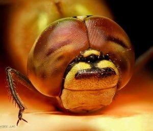 Enfermedades-que-causan-las-moscas-tipos
