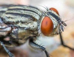 Plaga-de-moscas-de-Casa
