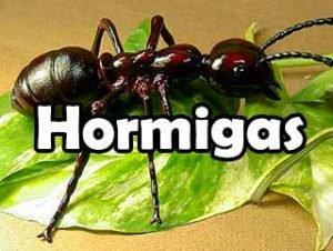 todo-sobre-hormigas-definicion-vida-eliminacion-historia