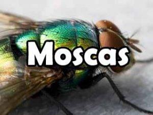 todo-sobre-moscas-definicion-vida-eliminacion-historia