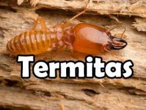 todo-sobre-termitas-definicion-vida-eliminacion-historia