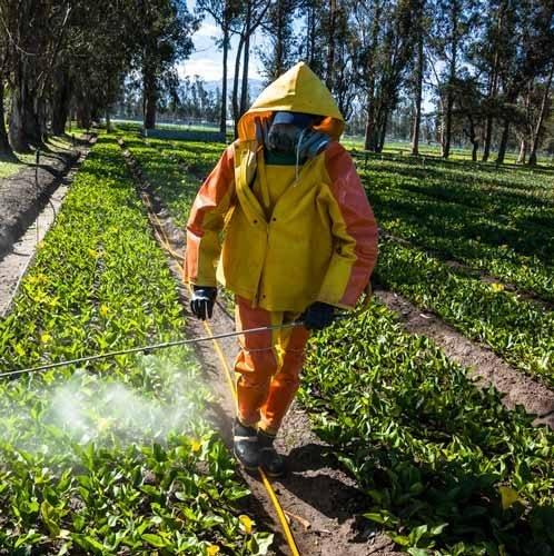 Empresa-de-Fumigación-en-Carabyllo-Perú-1