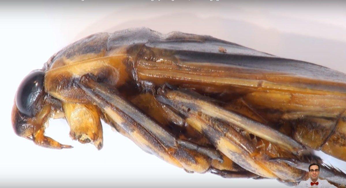 10 insectos más molestos del mundo-min
