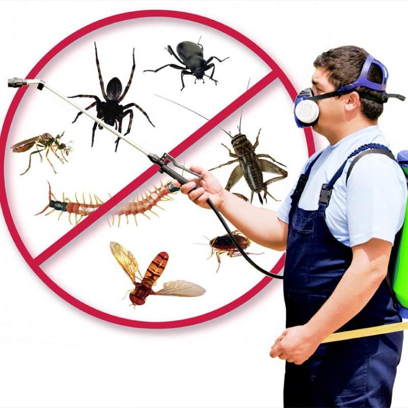 Control-Biológico-de-Plagas-en-lima-peru